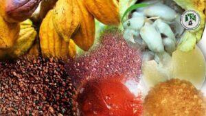 Transformation locale des fèves de cacao en poudre et beurre de cacao